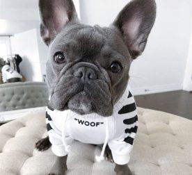 French-Bulldog-Clothes-Fashion-Dog-Hoodie-Adidog-Warm-Sport-Retro-Dogs-Hoodies-Pet-Clothes-Puppy-Pug-1-2.jpg